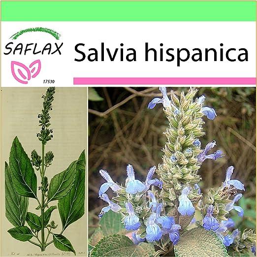 SAFLAX - Garden to Go - Chía - 500 semillas - Salvia hispanica ...