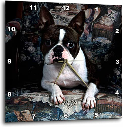 3dRose DPP_3112_3 Boston Terrier Philippe Wall Clock, 15 by 15-Inch