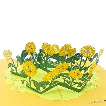 Amazon.com: Sol flor – especial 2 capas Tarjeta de 3d Pop Up ...