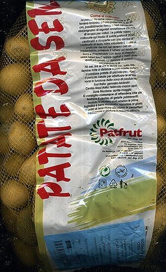 Patatas de siembra variedades kennebek en mini tubérculos ...