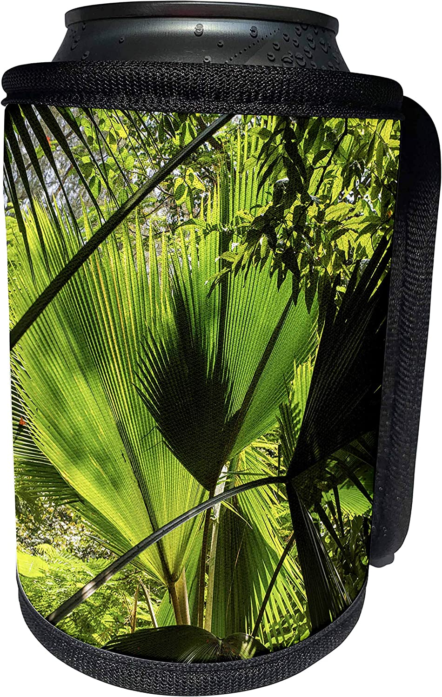 3dRose Danita Delimont - Botanical - Singapore, Fort Canning Park, tropical foliage - Can Cooler Bottle Wrap (cc_257291_1)