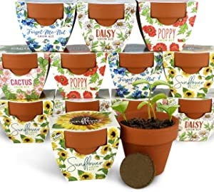 BUZZY Terracotta Mini Grow Pots   Assorted 6-Pack   Daydream Collection   Sunflower, Daisy, Poppy, Cactus, Forget-Me-Not   Best Gardening Gifts and Favors   Growth Guaranteed