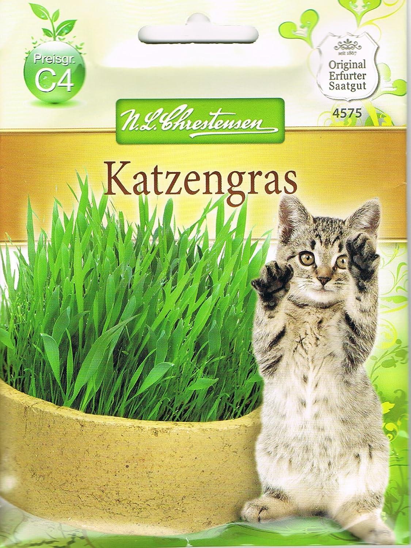 chrestensen Gato Hierba Mezcla de semillas: Amazon.es: Productos para mascotas