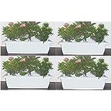 Livewell Green Rectangular Plant Box (Supreme White, Pack of 4)
