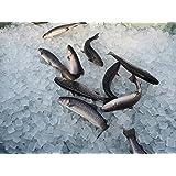 岩魚(イワナ)冷凍 新潟魚沼産 業務用 21㎝~22㎝サイズ 10尾入