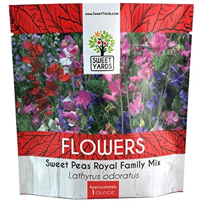 Sweet Pea Seeds Royal Mix - Bulk 1 Ounce Packet - Over 350 Seeds - Large Fragrant Lavender, Purple, Red, Pink and White Blooms : Garden & Outdoor