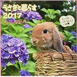うさぎと暮らすカレンダー 2017 ([カレンダー])