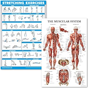 """QuickFit Stretching Exercises and Muscular System Anatomy Poster Set - Laminated 2 Chart Set - Stretching Workout Routine & Muscle Anatomy Diagram (18"""" x 27"""")"""
