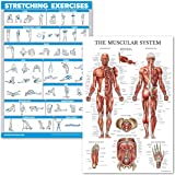 QuickFit Stretching Exercises and Muscular System Anatomy Poster Set - Laminated 2 Chart Set - Stretching Workout Routine & M