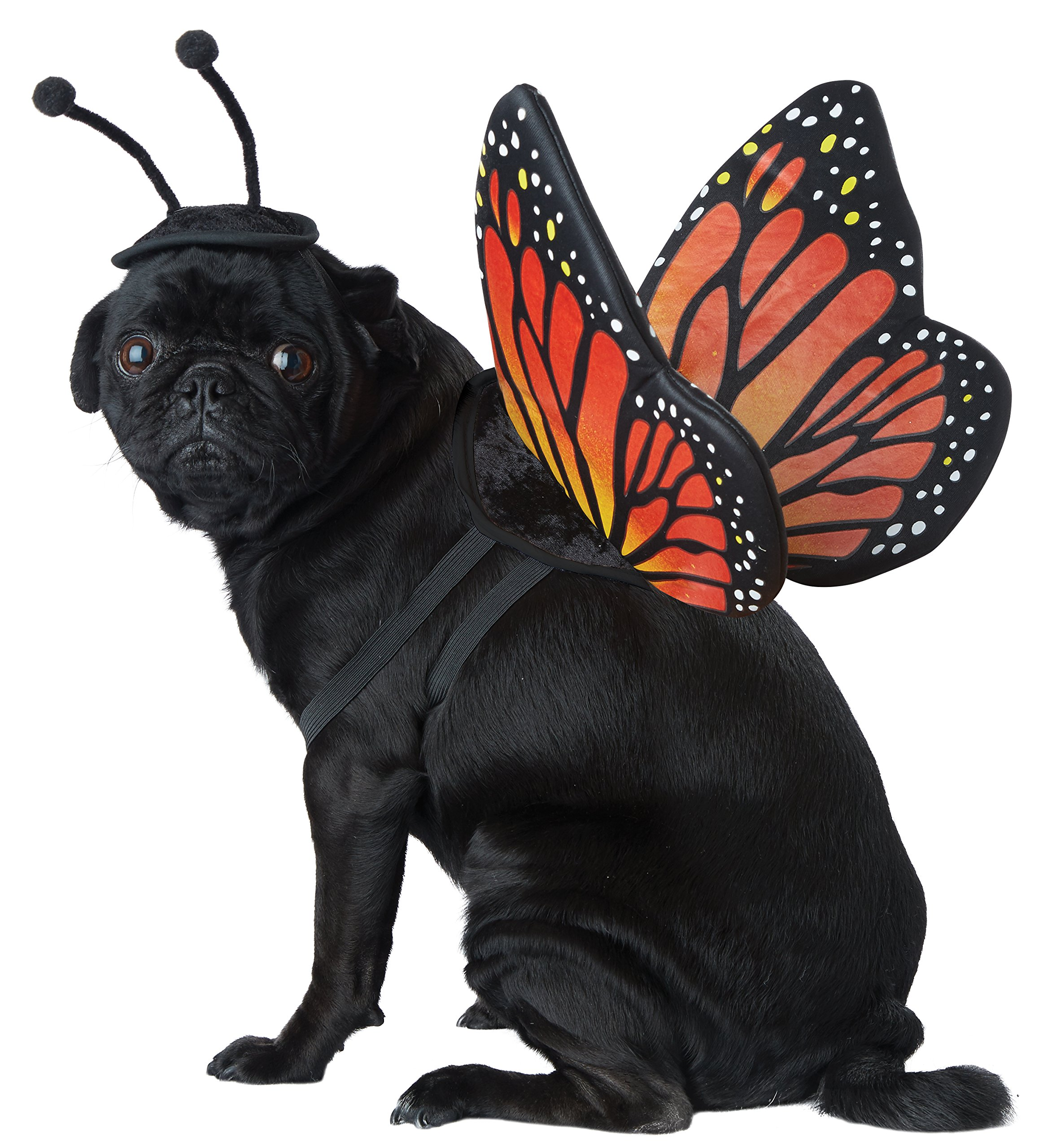 California Costumes Monarch Butterfly Dog Costumes, Pet, Black/Orange, Large by CALIFORNIA COSTUME COLLECTIONS