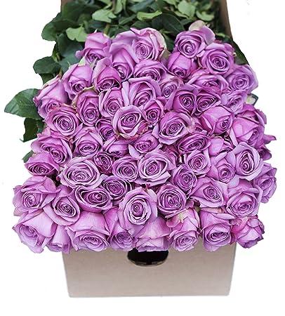 Amazon farm2door wholesale roses 25 fresh purple roses long farm2door wholesale roses 25 fresh purple roses long stemmed 50cm farm mightylinksfo