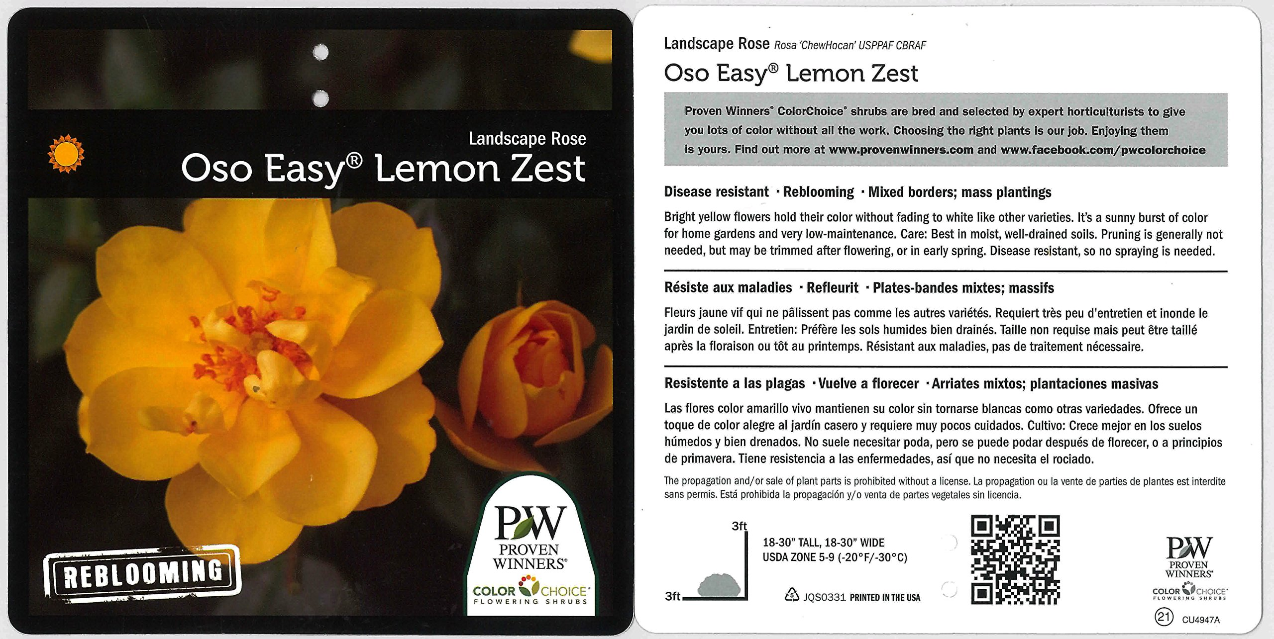3 Gal. Oso Easy Lemon Zest Landscape Rose (Rosa) Live Shrub, Yellow Flowers by Proven Winners (Image #3)