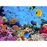 1 Wall Under The Sea Tropical Fish Wallpaper Mural Wood Multi Colour