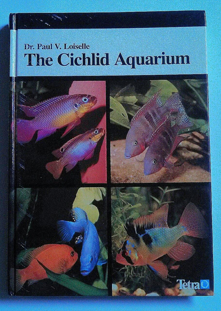 Cichlid Aquarium