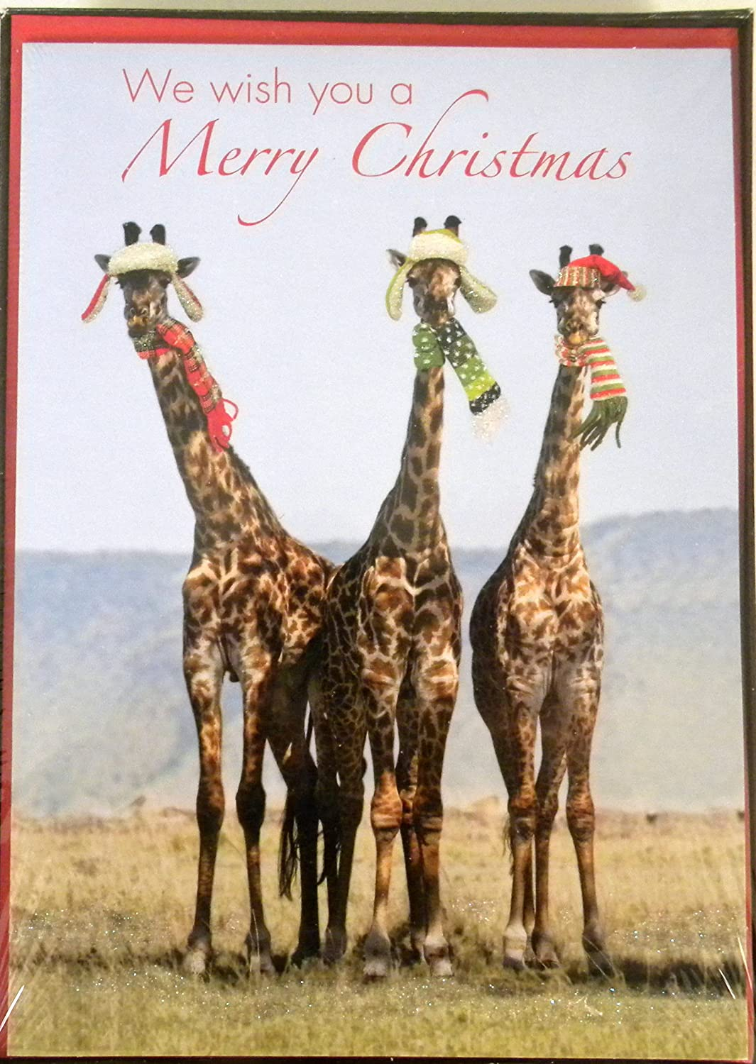 National Geographic Christmas Cards.Amazon Com National Geographic Giraffe Christmas Cards