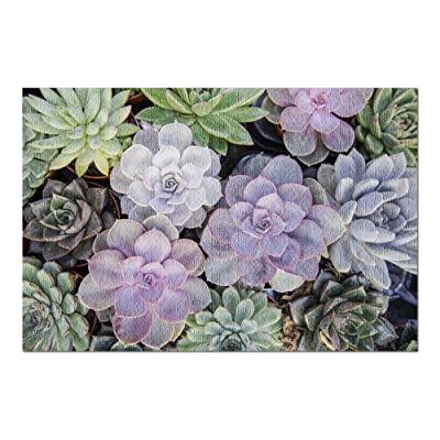 Collection of Small Decorative Colorful Succulents in Pots 9031077 (Premium 1000 Piece Jigsaw Puzzle for Adults, 20x30, Made in USA!): Toys & Games