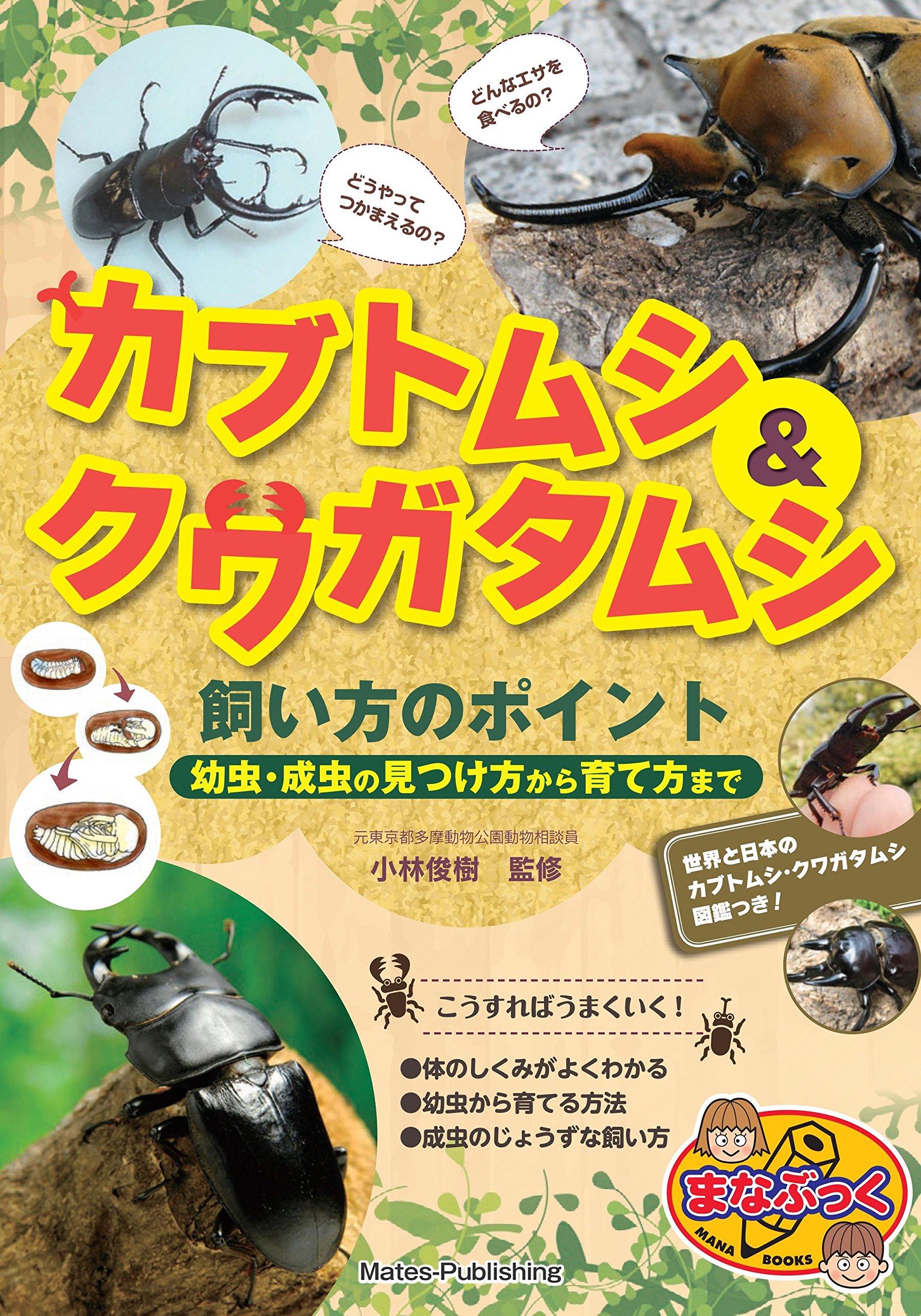 方 幼虫 育て カブトムシ
