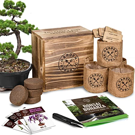Amazon Com Bonsai Tree Seed Starter Kit Mini Bonsai Plant Growing Kit 4 Types Of Seeds Potting Soil Pots Pruning Shears Scissor Tool Plant Markers Wood Gift Box Indoor Garden Gardening