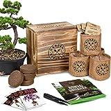 Bonsai Tree Seed Starter Kit - Mini Bonsai Plant Growing Kit, 4 Types of Seeds, Potting Soil, Pots, Pruning Shears Scissor To