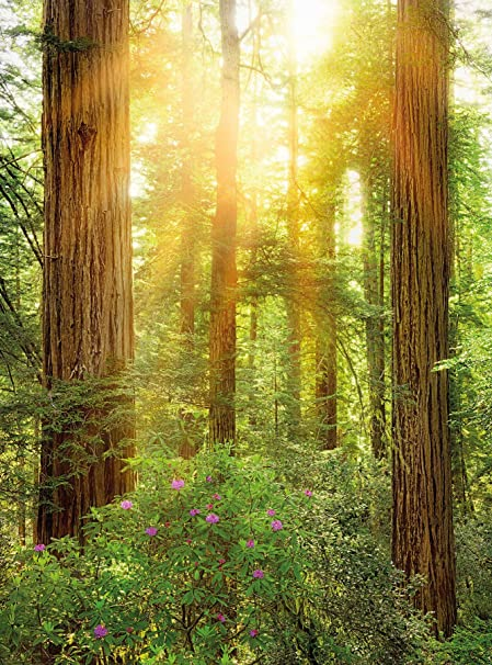 Komar XXL2 044 Redwood National Park Scenic Wallpaper Wall Mural