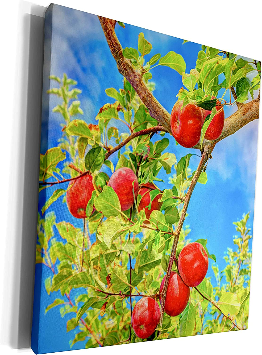 3dRose Danita Delimont - Fruits - Jonagold Apples on Trees, Yakima Valley, USA - Museum Grade Canvas Wrap (cw_231826_1)