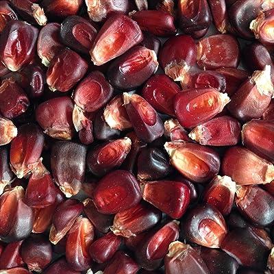 Wayland Chiles Bloody Butcher Corn, 100 Seeds : Garden & Outdoor