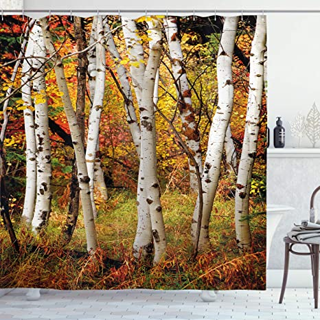 Amazon Com Ambesonne Fall Decor Shower Curtain White Fall Birch Trees With Autumn Leaves Growth Wilderness Ecology Calm View Fabric Bathroom Decor Set With Hooks 70 Long Multicolor Home Kitchen