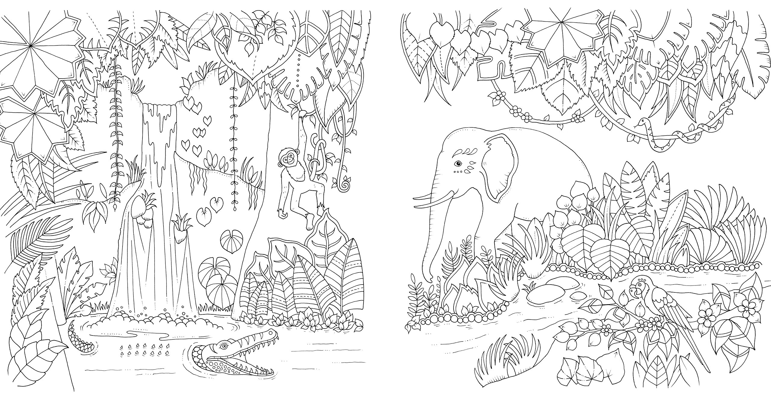 Magical Jungle An Inky Expedition Colouring Book Colouring Books