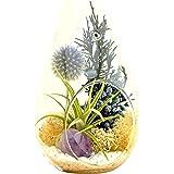 "Bliss Gardens Air Plant Terrarium Kit with 7"" Teardrop Glass / Purple Amethyst Crystal / Shabby Chic"