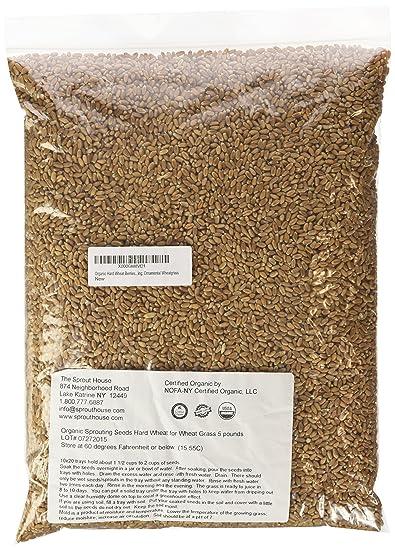Amazon non gmo certified organic hard wheat berries for non gmo certified organic hard wheat berries for wheatgrass juice 5 pounds wheatgrass workwithnaturefo