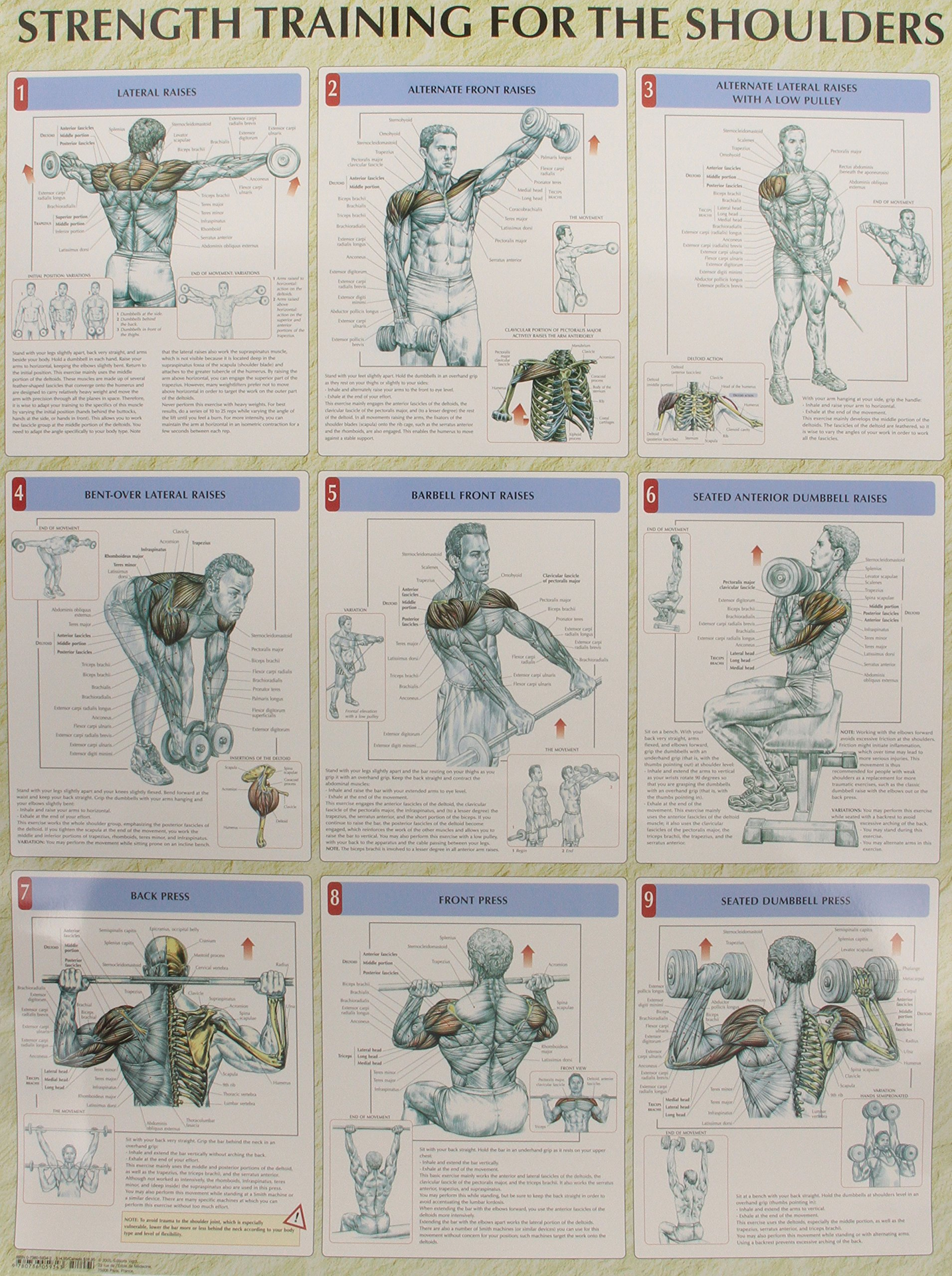 Strength Training Anatomy Poster Series Frederic Delavier