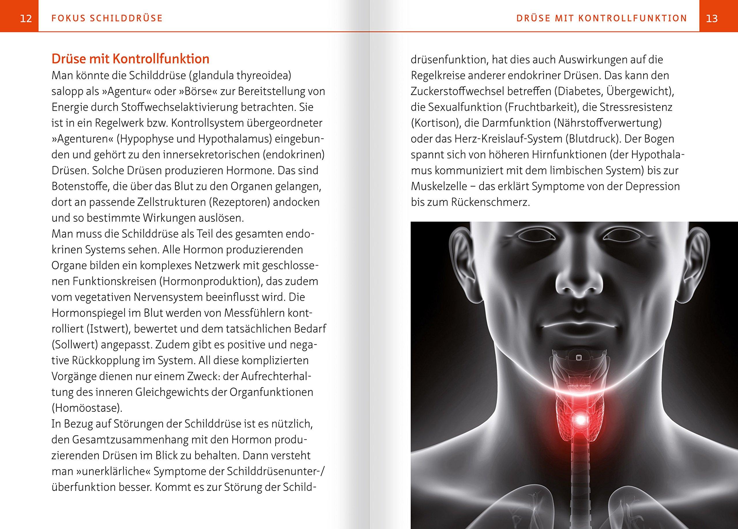 Ausgezeichnet Die Drüsen Des Endokrinen Systems Fotos - Physiologie ...