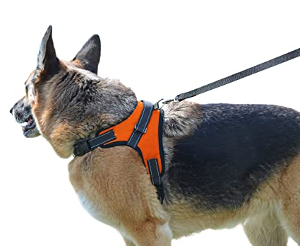 Pet Supplies : My Pets America Dog Harness for all Breeds - Harness