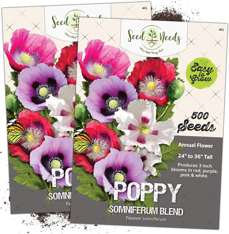 Poppy Somniferum Seeds .2 oz 120.000 seeds blue Afghan Organic NON GMO .