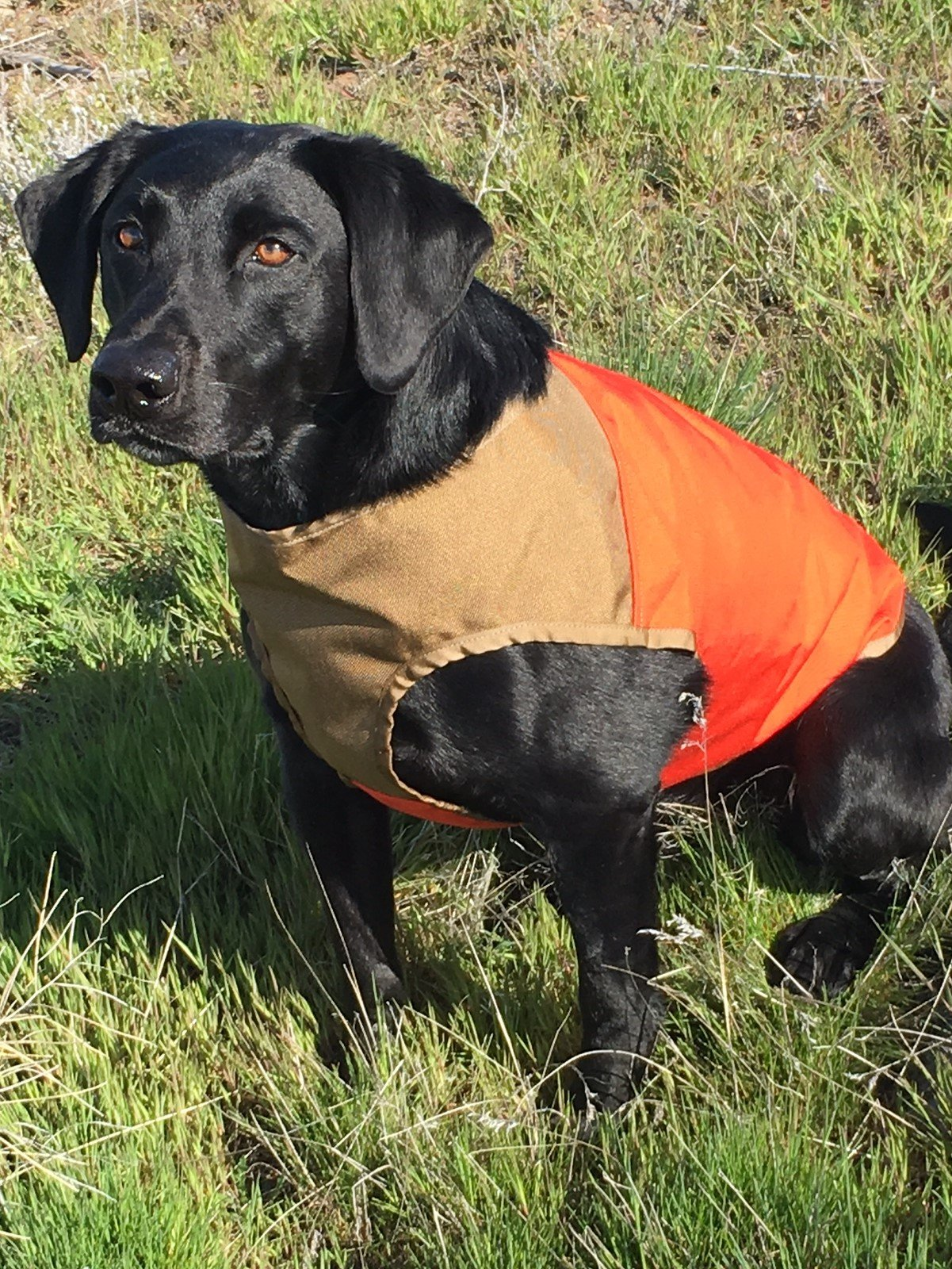 CUGA VEST Serious Protection for The Active Dog (LRG, Orange/Tan)