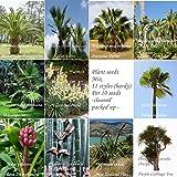 Giardino Mix - 11 specie per 10 semi - palma - banana - Bamboo