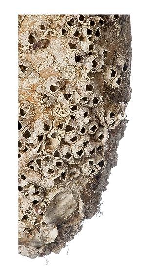 Reproducción 100% natural réplica exacta de anforas antiguas romanas, fenicias y griegas mediante un proceso de aceleracion ...