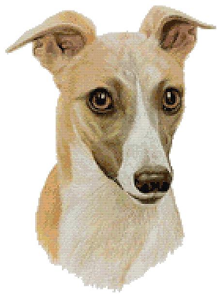 Whippet Dog Portrait Counted Cross Stitch Pattern Chart Amazon
