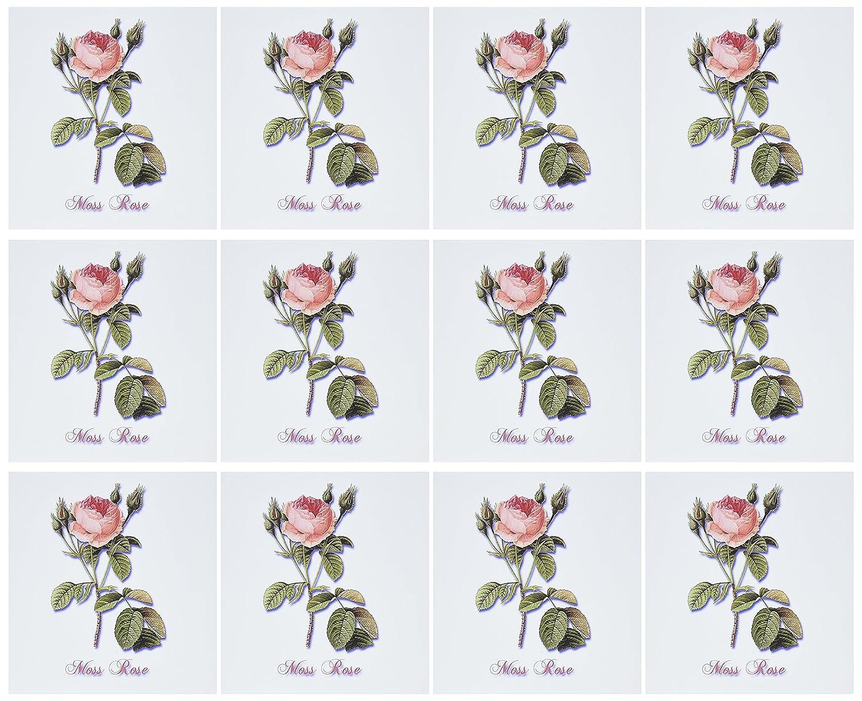 3dRose gc_180170_2 - Tarjeta de felicitación, diseño de rosas de de rosas musgo con rosas, 15,2 x 15,2 cm, color rosa 20bf7f