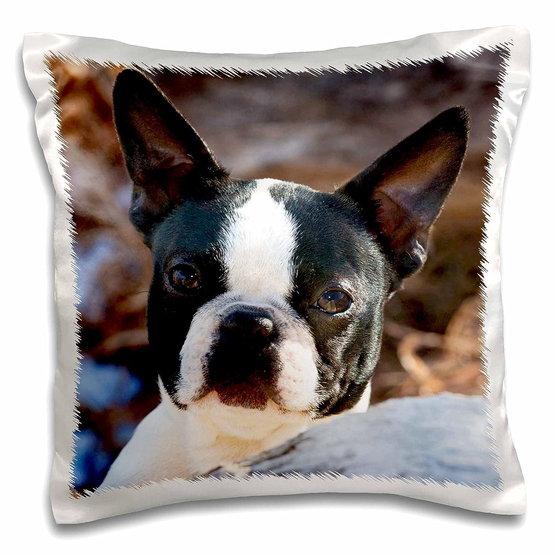 3dRose pc/_140275/_1 Pillow Case 16 x 16