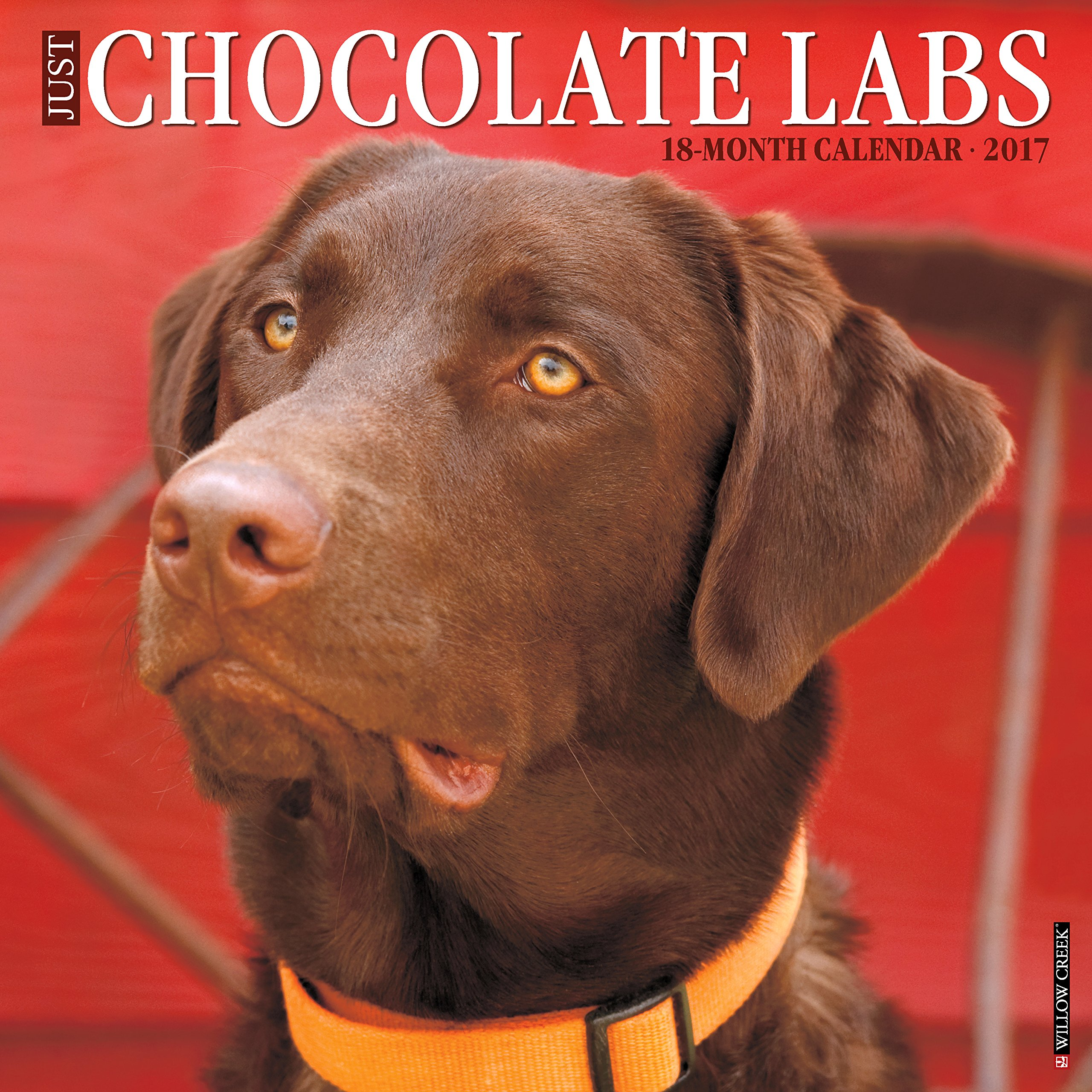 Calendar Labs : Galleon just chocolate labs wall calendar dog