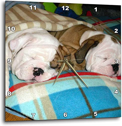 3dRose DPP_51655_1 English Bulldog Powernap Wall Clock, 10 by 10-Inch