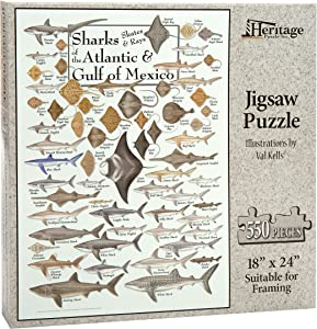 Heritage Puzzle Sharks, Skates & Rays of The Atlantic & Gulf of Mexico - 550 Piece Jigsaw Puzzle