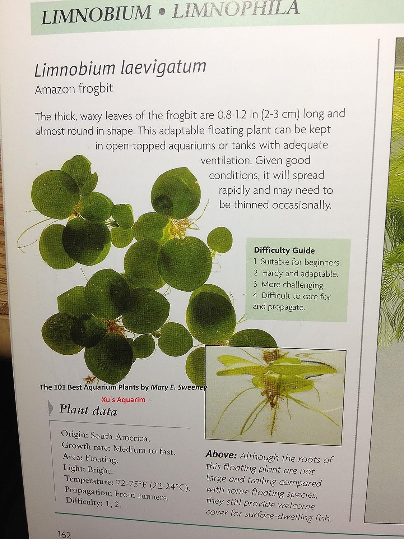amazon com 12 amazon frogbit limnobium laevigatum live aquarium