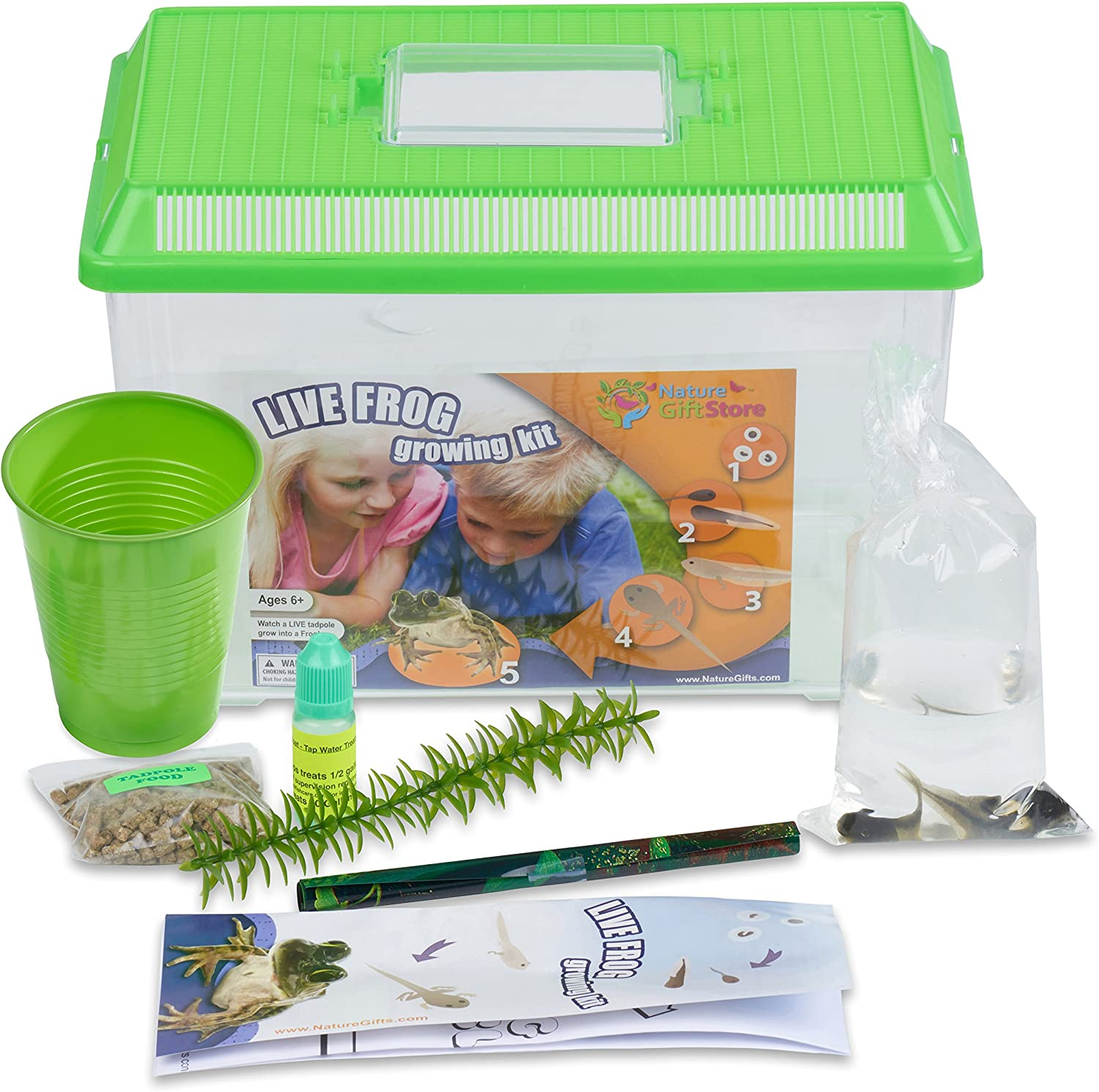 Nature Gift Store Tadpole to Frog Growing Kit with 2 Live Tadpoles Sent with Kit