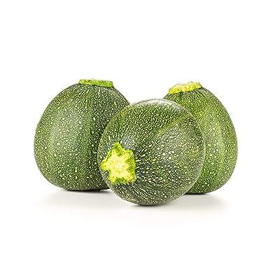 Summer Squash, Zucchini Eight Ball Hybrid Seeds - Non-GMO - 10 Seeds : Garden & Outdoor