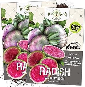 Seed Needs, Watermelon Radish (Raphanus sativus) Twin Pack of 500 Seeds Each Non-GMO