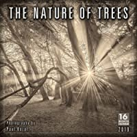 2019 The Nature of Trees 16-Month Wall Calendar: by Sellers Publishing, 12x12 (CA-0398)