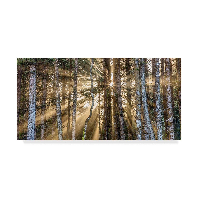 Sunshine Forest by Pierre Leclerc , 12 x 24インチ   B07B4KK5KH