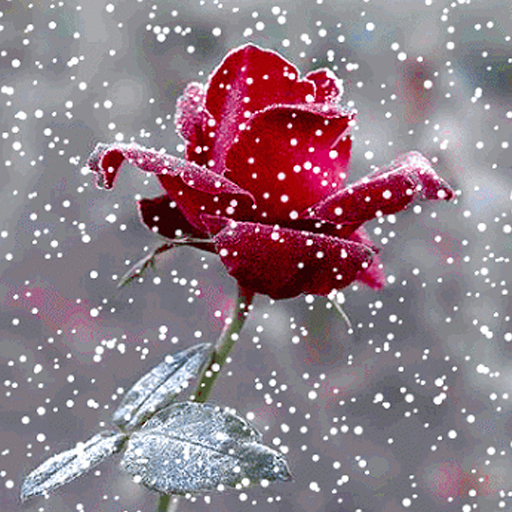Snow Live Wallpaper: Live Wallpaper: Appstore For Android